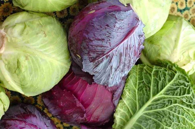 Cabbage Varieties  Photo borrowed from this lovely blog : http://www.thehealthbenefitsof.net/2012/04/cabbage/